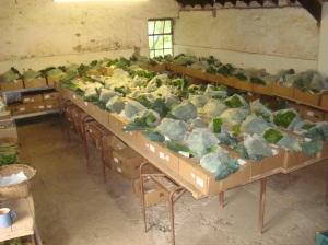 Rows of veg boxes being prepared
