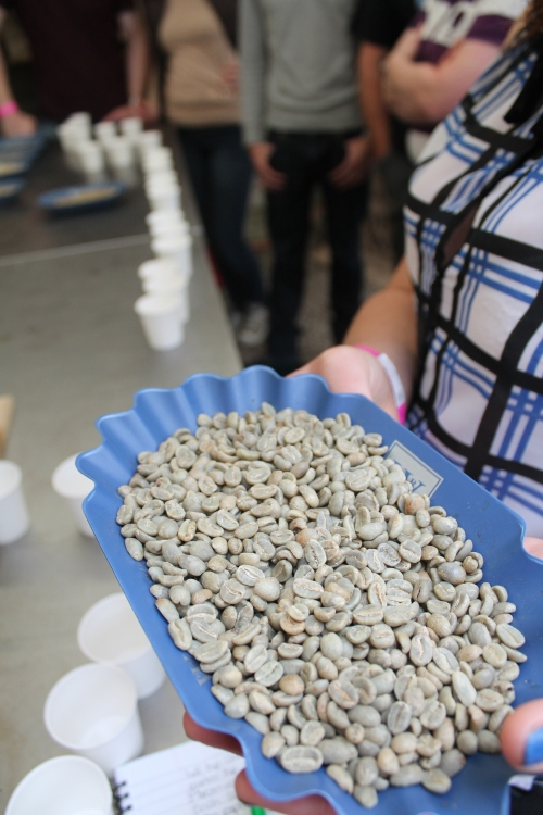 coffee beans, pure and unroasted